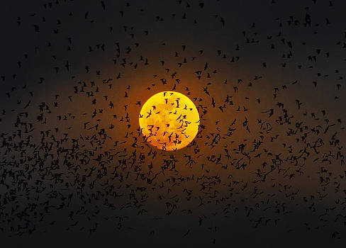 Bats under the moonlight  by Weerapong Chaipuck