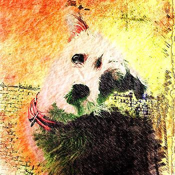Baxter by Kevyn Bashore