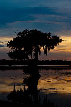 Bayou Beauty by Susie Hoffpauir