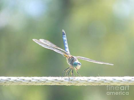 Smiling Dragonfly by Eunice Miller