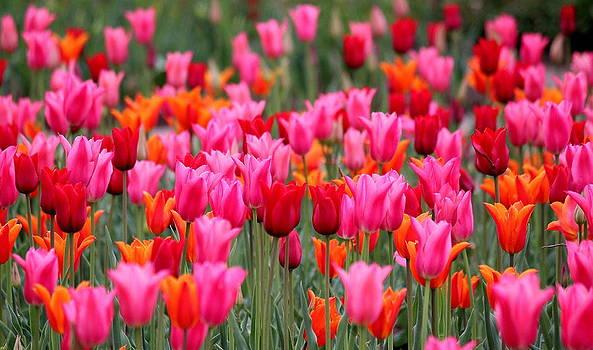 Rosanne Jordan - Be Still My Springtime Heart