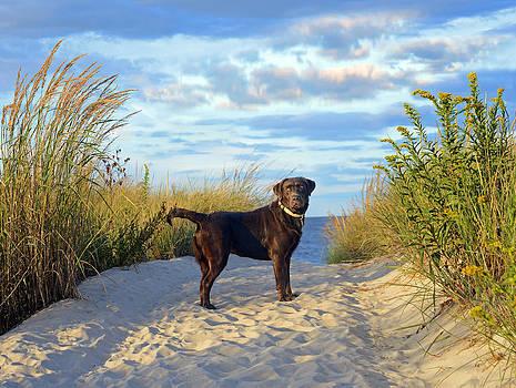 Beach Beauty by Dale Hall