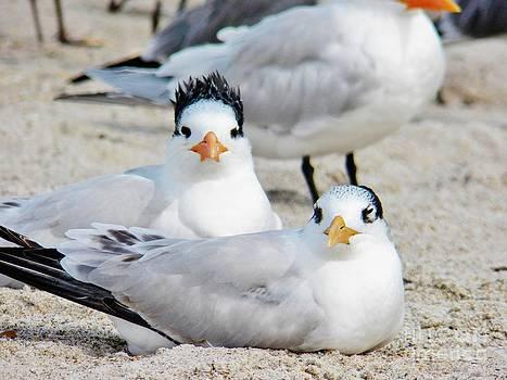 Judy Via-Wolff - Beach Bird Hairdo