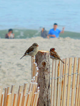 Beach Birds by Glenn McCurdy