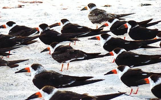Beach Birds by Van Ness