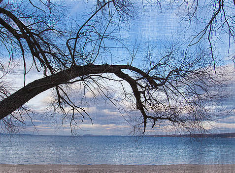 Beach Branch  by Mary Underwood