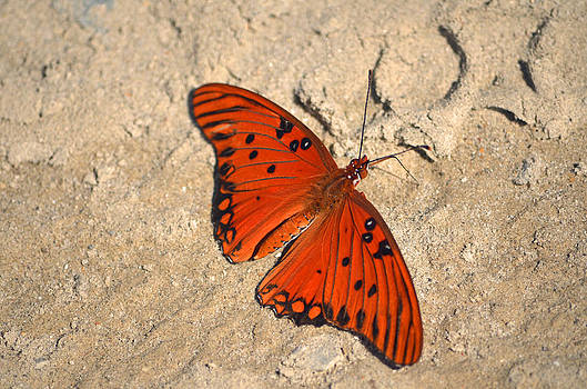 Beach Butterfly by Making Memories Photography LLC