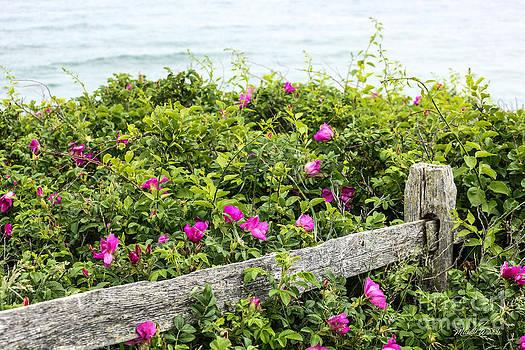 Michelle Wiarda-Constantine - Beach Dreams