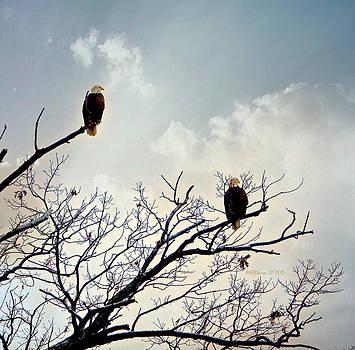Beach Eagles by Sheila Noren