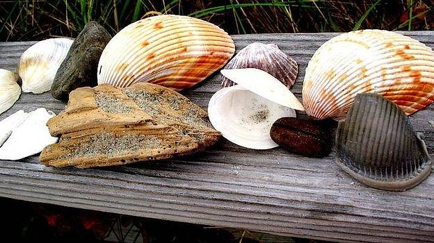 Beach Findings by Rebecca West