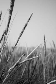Bamalam  Photography - Beach Grass
