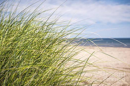 Elena Elisseeva - Beach grass