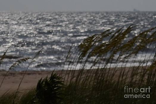 Beach Grass in Wind by Wayne Pellenberg