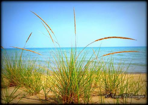 Beach Grass by Terri K Designs