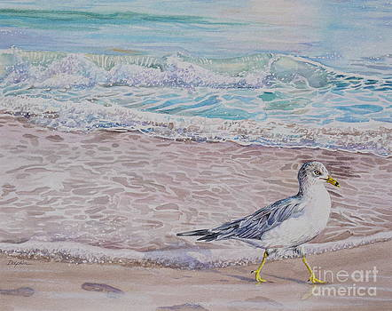 Beach Gull by Gail Dolphin
