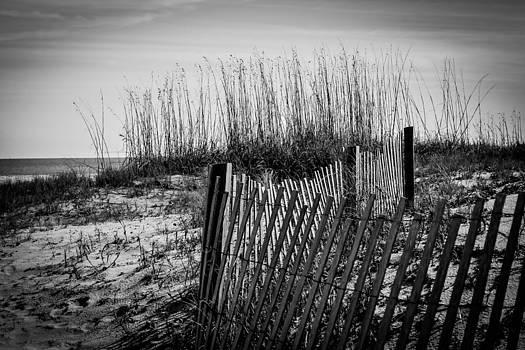 Beach by Jose Mena