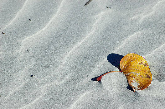 Beach Leaf by Bruce Gourley