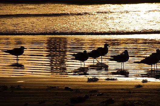 Beach Morning by John Collins