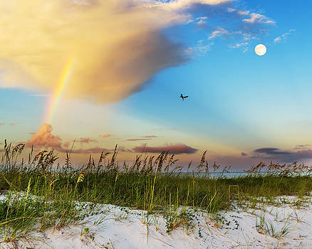 Beach Morning by Robert Hainer