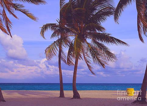 Beach Palms by Dan Hilsenrath