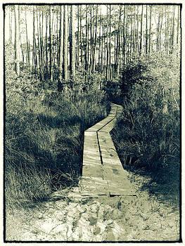 Beach Path by Jeanne Hoadley