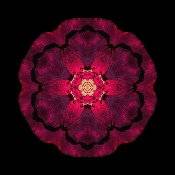 Beach Rose II Flower Mandala by David J Bookbinder