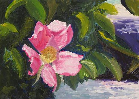Lea Novak - Beach Rose Newport