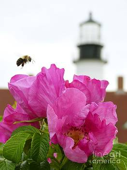 Christine Stack - Beach Rose with Bee and Portland Headlighgt