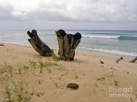 Sophie Vigneault - Beach scenery