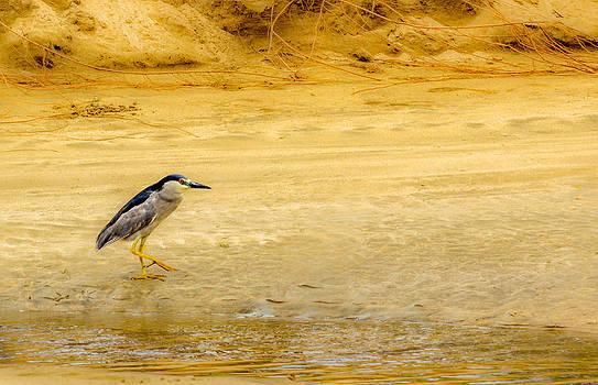 Beach Stroll by Jonica Hall