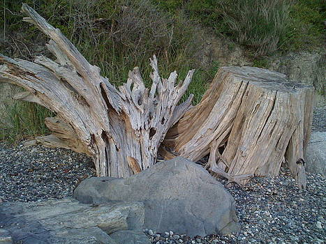 Beach stump by Christopher Gibson
