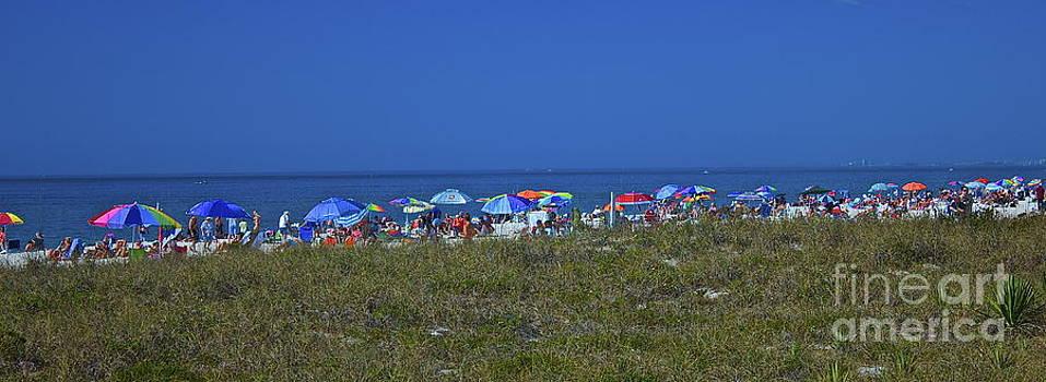 Amazing Jules - Beach Umbrellas