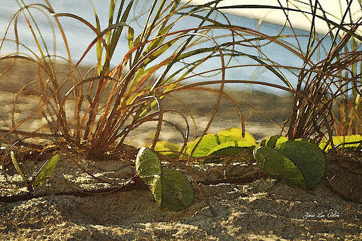 Beach Vine by Janis Lee Colon