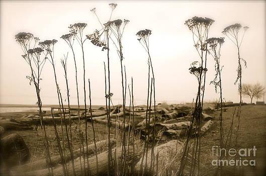 Beach weed by Tina Hannaford