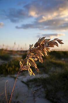 Beach Wheat by Chris Brehmer Photography