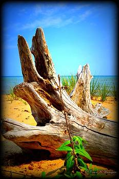 Beach Wood by Terri K Designs