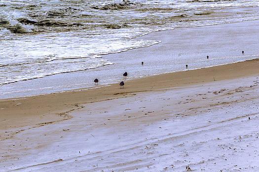 Barry Jones - Beachcombing - Beach - Seascape