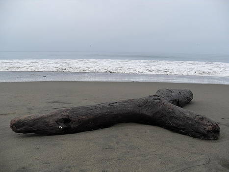 Beached Driftwood by Laura Young