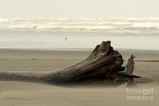 Deanna Proffitt - Beached Log