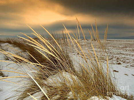Beachgrass Stormy Snow Sunset Of Lake Michigan by Jack  Martin