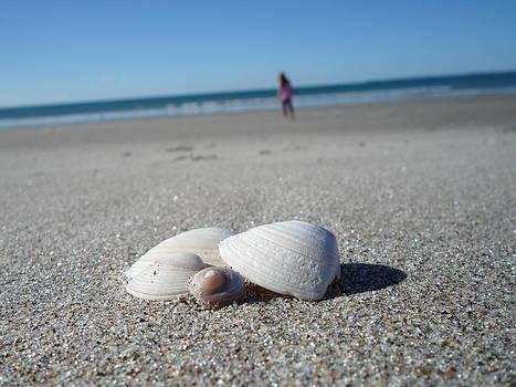 Beachy Shells by Bailey Mowser