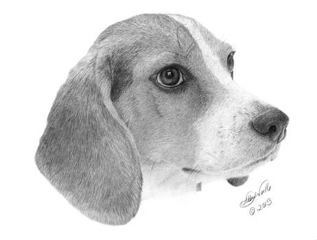 Beagle - 007 by Abbey Noelle