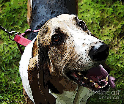 Nancy Stein - Beagle