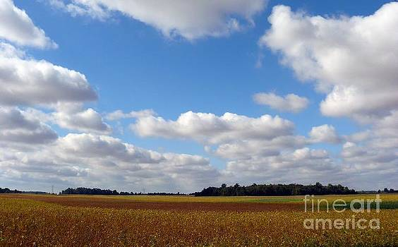 Beans And Sky by Susan Olga Linville