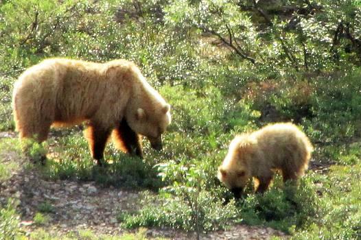 Lisa Dunn - Bear and cub at Denali