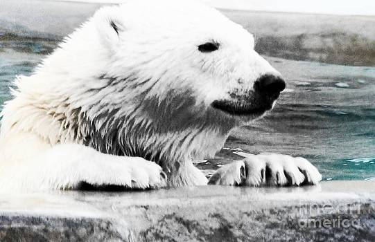 Bear Cub In Pool by Kathleen Struckle