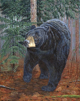 Bear Path by Marshall Bannister
