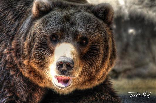 William Reek - Bear Stare