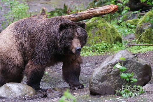 Bear-walking by Walter Strausser