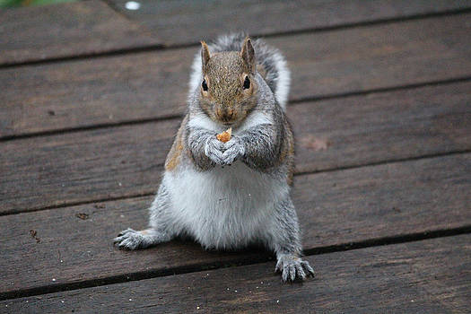 Beast Mode Squirrel by Kym Backland
